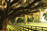 Majestic Oaks 2