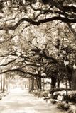 Savannah Sidewalk Sepia I