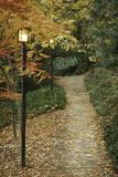 Autumn Path I