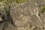 Big-Horn Sheep and Other Jornada-Mogollon Petroglyphs at Three Rivers Site  New Mexico