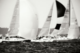 Race on the Chesapeake II