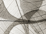 Leaf Designs I Sepia