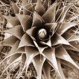 Desert Plants I