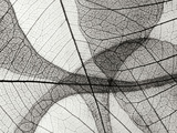 Leaf Designs I BW