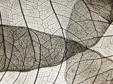 Leaf Designs II Sepia