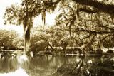 Mossy Lake II