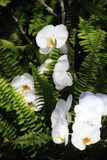Orchids and Ferns I
