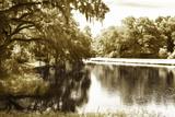 Mossy Lake I
