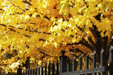 Boughs of Gold 4