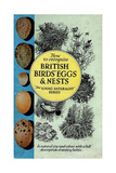 1950s UK British Birds Eggs and Nests Book Cover