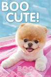 Boo The World's Cutest Dog Poolside Poster