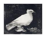 Dove, 1949 Reproduction d'art par Pablo Picasso
