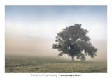 Paradise Haze