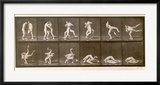 Two Men Wrestling  Plate 347 from 'Animal Locomotion'  1887 (B/W Photo)