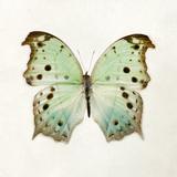 Butterfly Impression Giclée par Irene Suchocki