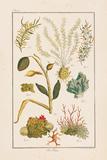 Sea Plants II