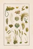 Sea Plants I