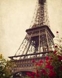 Roses de Paris Giclée par Irene Suchocki