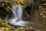 A Small Waterfall Among European Beech Leaves