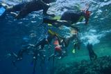 Snorkelers in Jackson Reef Near Sharm El Sheikh