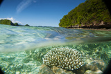 The Sea Floor of Palau's Rock Islands