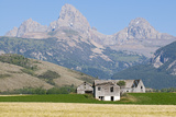 Abandoned Farmhouses and Wheat Fields in Front of the Teton Range