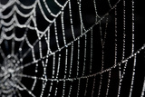 Close Up of a Spider's Web with Dew On It