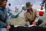 A Cowboy Castrates a Young Calf  While Behind Him Two Others Wrestle a Calf to the Ground