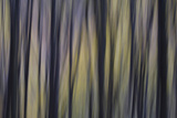 An Abstract View of a European Beech  Fagus Sylvatica  Forest