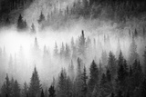 Fog Drifts Through a Coniferous and Aspen Forest Along Maroon Creek