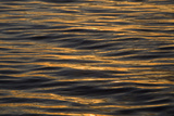 Sunlight Reflecting On Gently Rippled Water At Sunrise