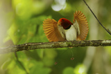 Vogelkopf Peninsula  West Papua  New Guinea  Indonesia