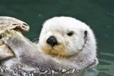 Portrait of a Cute, Furry Sea Otter Looking At the Camera Papier Photo par Karine Aigner