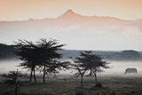 White Rhinos Appear Out of the Mist in Front of Mount Kenya Papier Photo par Robin Moore
