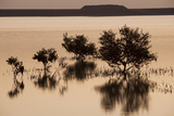 Sunrise On Mangrove Trees in the Bay Off of Sir Bani Yas Island