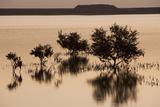 Sunrise On Mangrove Trees in the Bay Off of Sir Bani Yas Island