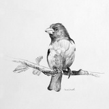 Bird Drawing IV