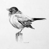 Bird Drawing III