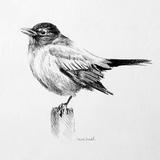 Bird Drawing III