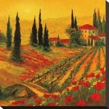 Poppies of Toscano I