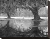 Two Oaks and Reflection  Audubon Park  NOLA