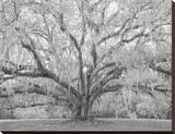 Children's Oak  Louisiana