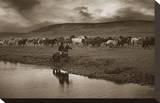 Sombrero Herd