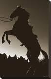 Stallion Silhouette