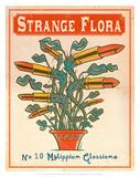 No10 Mylippium Glossioma