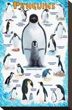 Penguins for Kids