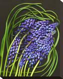 Spring Flower Garden Hyacinths