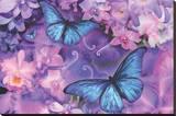 Violet Orchid Morpheus