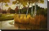 Reeds Birchs and Water II