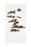 Medium Group of European Polecats (Mustela Putorius)  Illustration